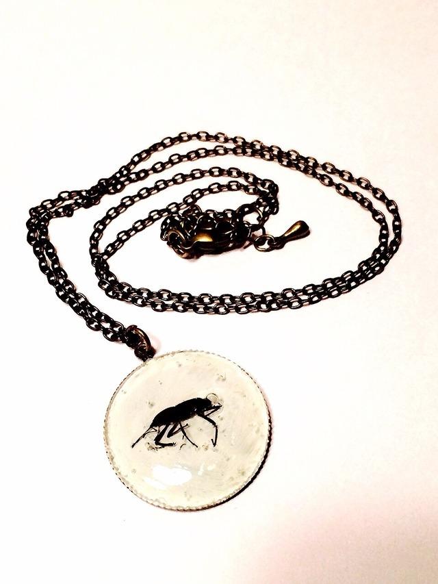 sale! ミニサイズゾウムシ気泡昆虫標本ネックレス