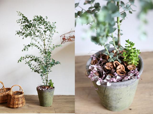 ユーカリと多肉植物モスポット植えL