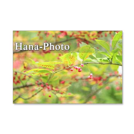 1178) 美しい日本の秋  ポストカード5枚組