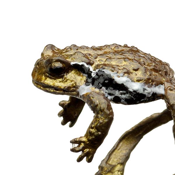 ニホンヒキガエルの画像 p1_33