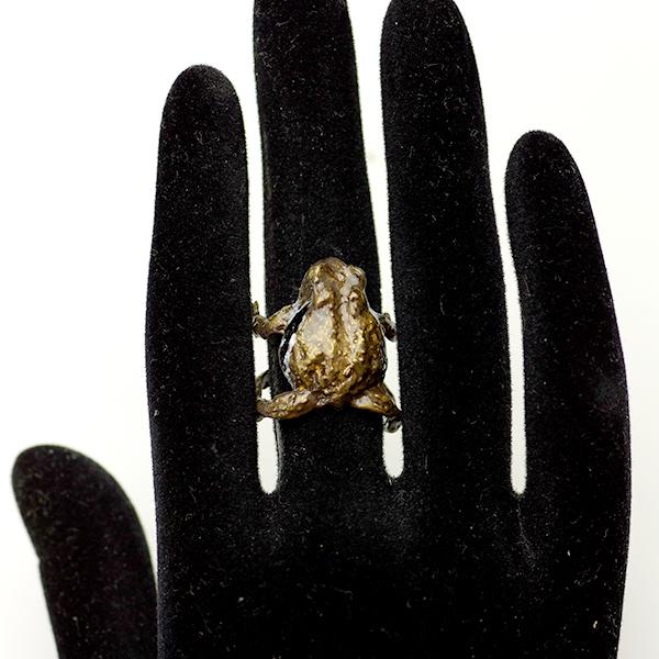 ニホンヒキガエルの画像 p1_16