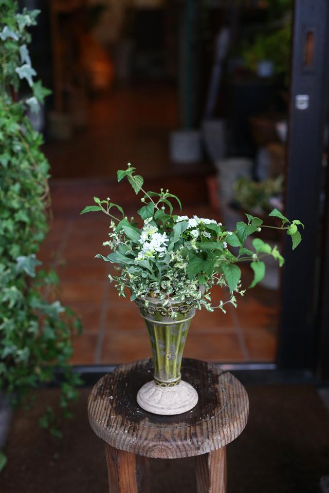 【1点物】八重咲きブラキカムとストックのギャザリングD