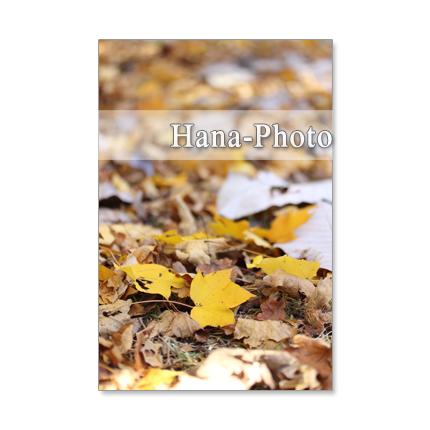 1193) 紅葉、黄葉の葉たち   ポストカード5枚組