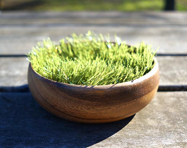 小さな公園、緑(グリーン)の芝(植物)の...