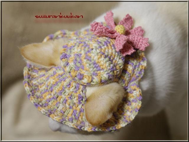 【猫用】編みスラウチハット029<紫橙黄緑白段染め>秋桜付き