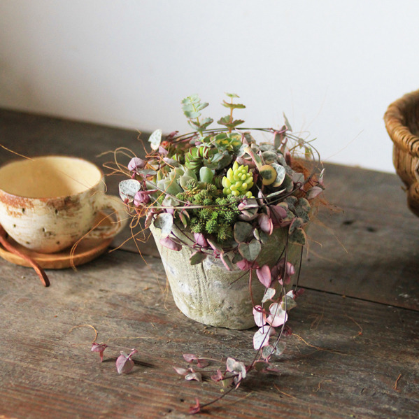 ホワイトモスポット多肉植物寄せ植え(ハートカズラ)
