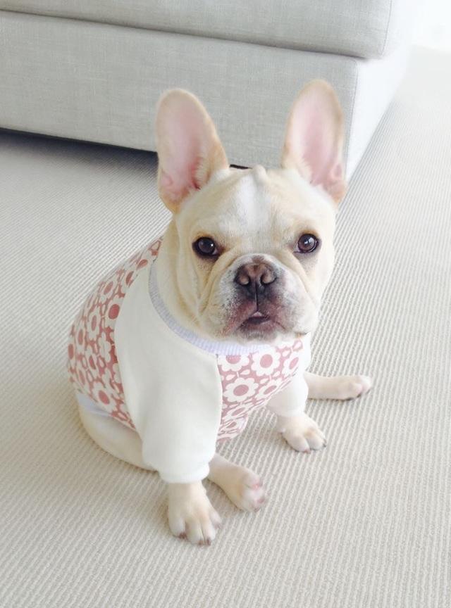 秋冬ワンコ服オーダー☆北欧花柄Tピンク☆フレンチブルドッグパグ犬服