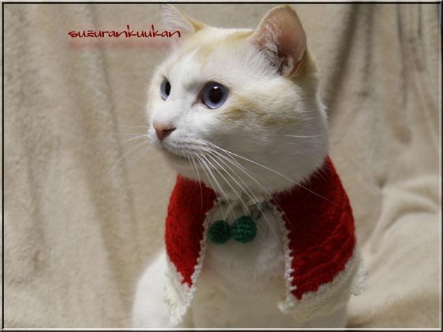 【猫犬用】ケープ首周り23cm 025ハッピーカラー<赤×白>