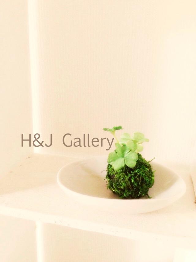 小さな苔玉 クローバー(受皿付き)