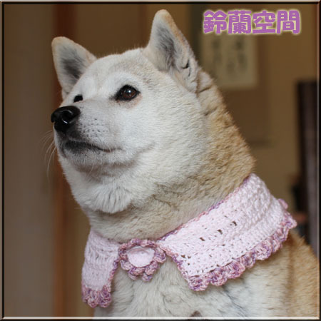 ★受注制作★【犬用】ケープ首回り38cm制作します
