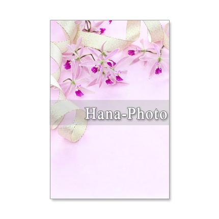 1204) 洋蘭4  ポストカード5枚組