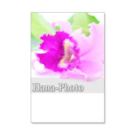 1201) 洋蘭1  ポストカード5枚組