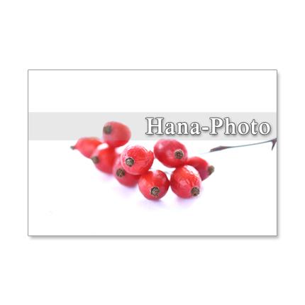 1207)鈴バラの赤い実  ポストカード5枚組