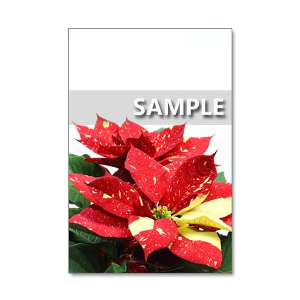 1013) クリスマス 5  ポストカード5枚組