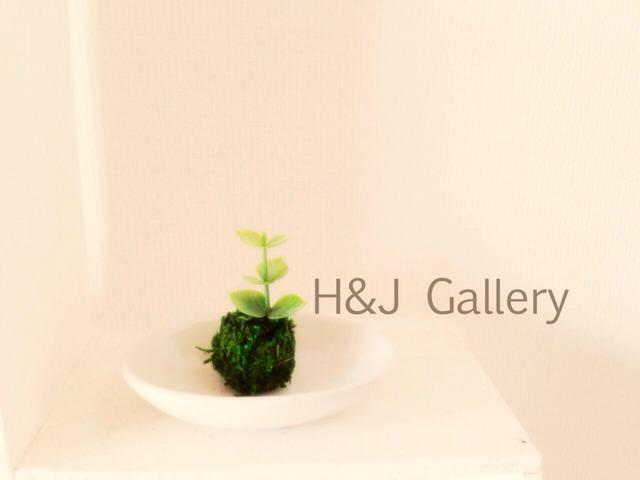 ○小さな苔玉 ユーカリ(受皿付き)
