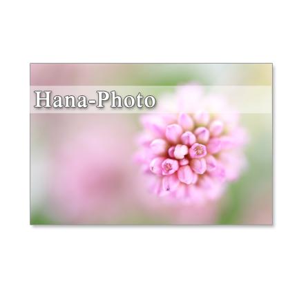 1213) ヒメツルソバとソバの花 クローズアップ  ポストカード5枚組
