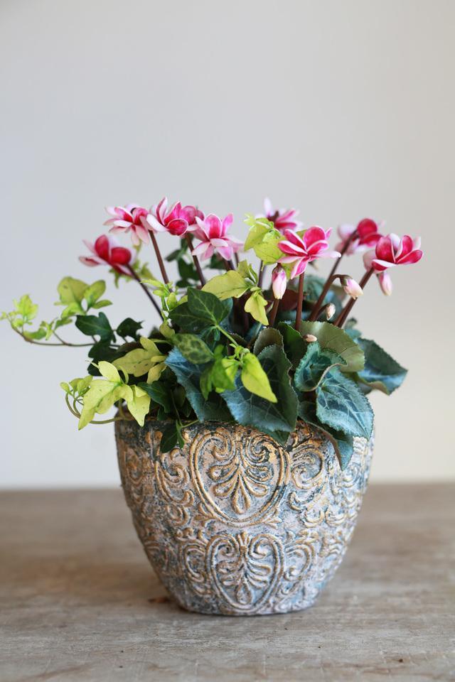 【1点物】室内で楽しむ。変わり咲きシクラメンとアイビーのギャザリング