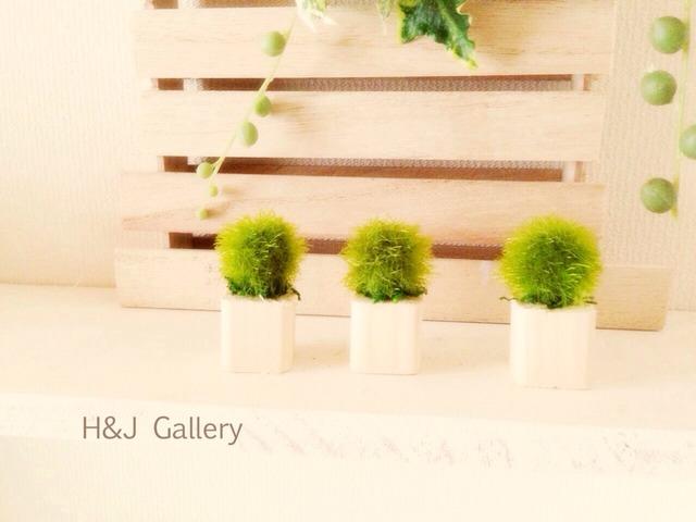 ◎更に小さな植木鉢 藻 ナチュラル