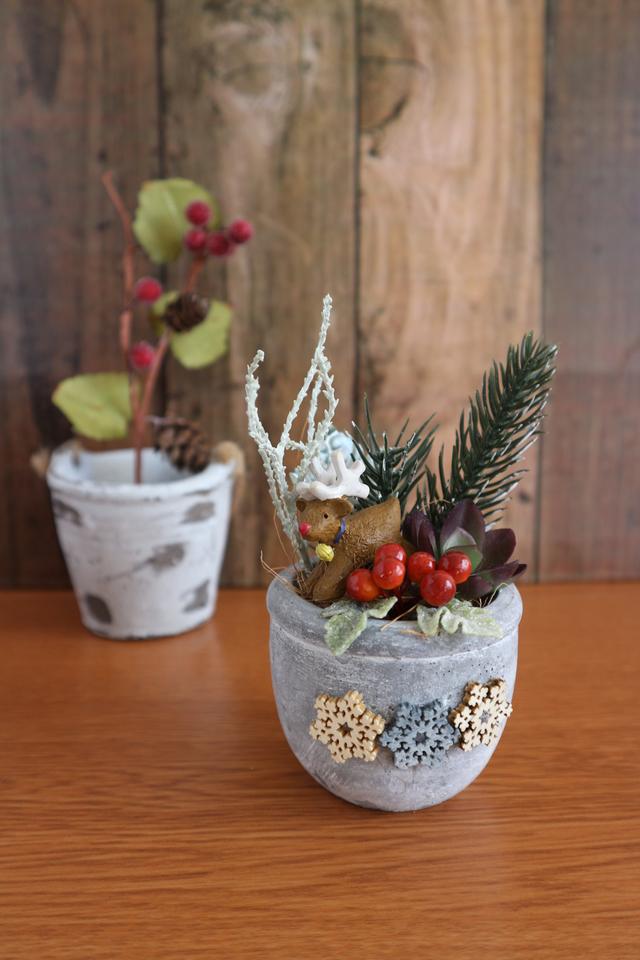 多肉ちゃんのクリスマス(トナカイさん)