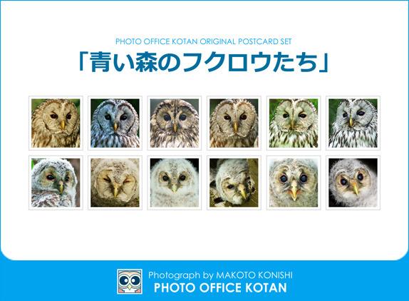 フクロウのポストカード12枚セット「青...