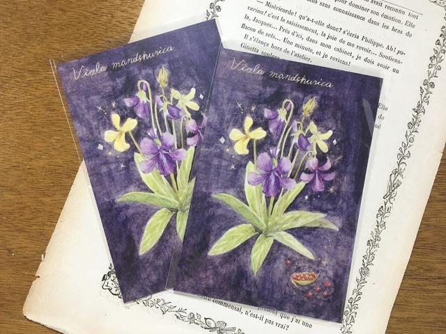 植物図鑑のポストカード 夜露のスミレ