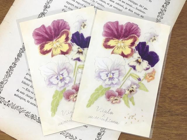 植物図鑑のポストカード  ビオラ