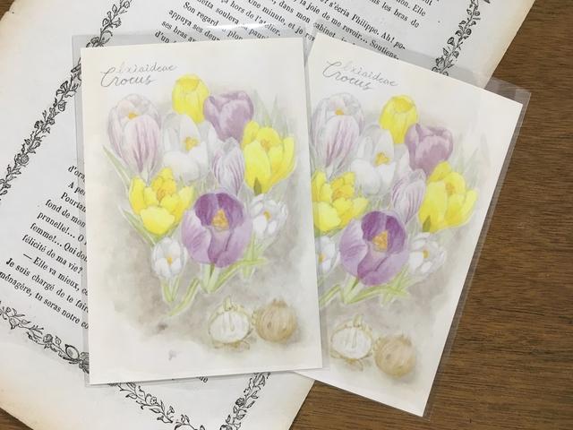 植物図鑑のポストカード  クロッカス