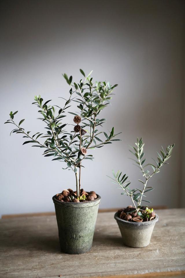 オリーブ+多肉植物寄せ植えMサイズ