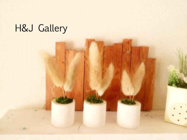☆小さな小さなちーさな植木鉢*ラグラス 白鉢