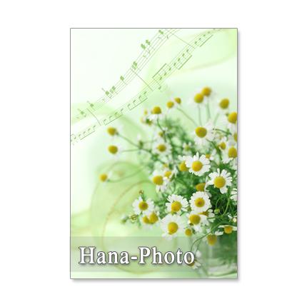 1214) カモミール  2  ポストカード5枚組