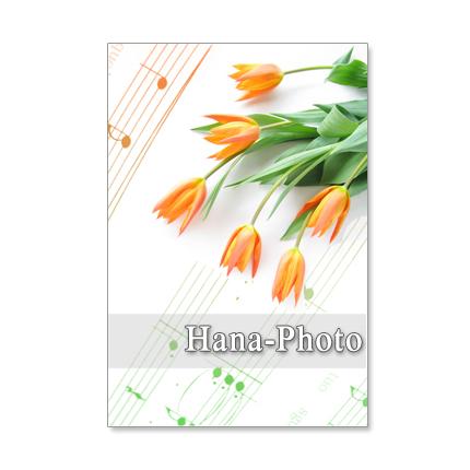 1217)春の花 チューリップ  5枚選べ...