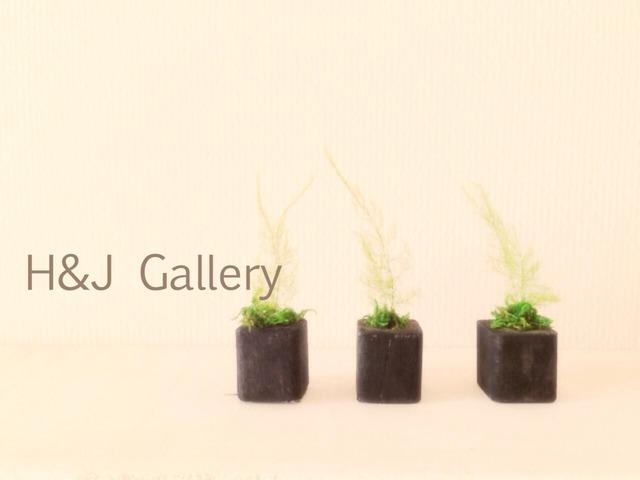 更に小さな植木鉢 黒  アスパラ