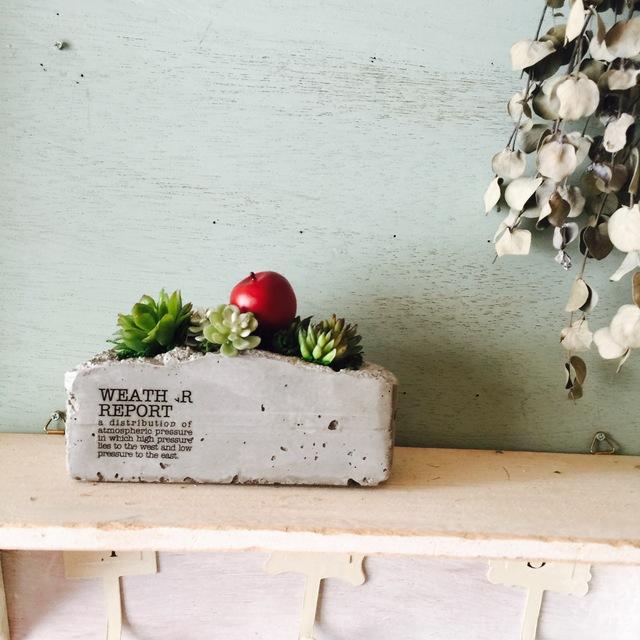 セメント鉢の寄せ植え 林檎ちゃん