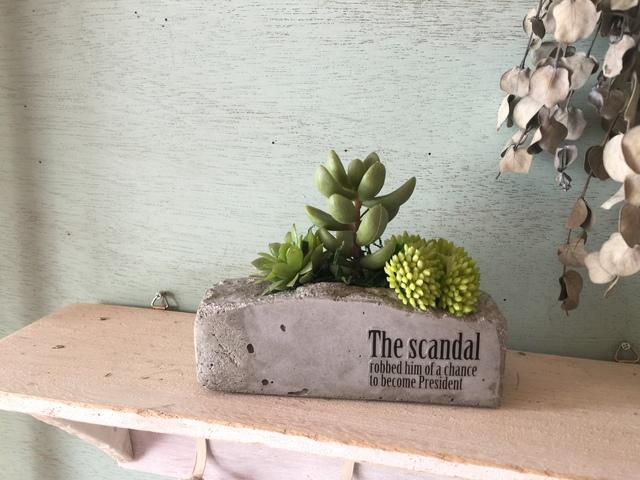 セメント鉢の寄せ植え 男前SCANDAL