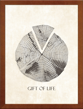 Gift of life free photo style a4 gift of life free photo style a4 negle