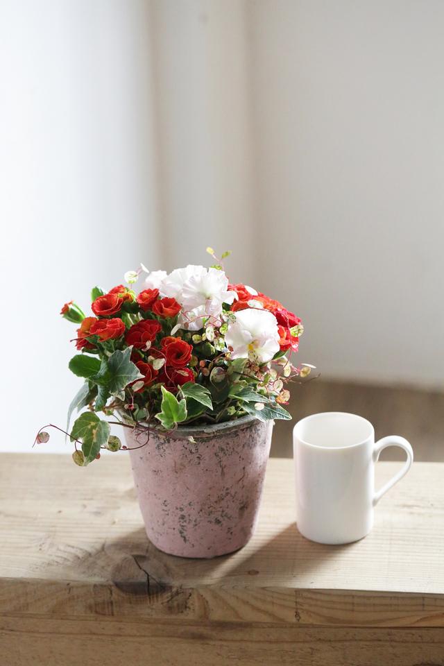 【1点物】育種プリムラの陶器ギャザリング