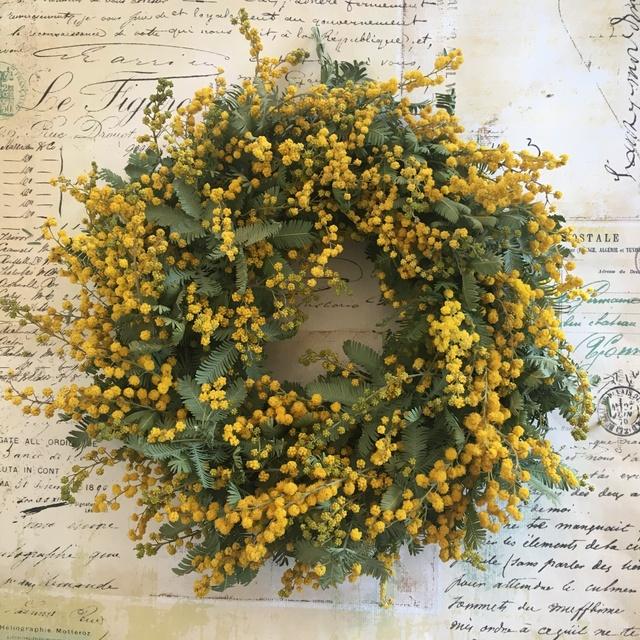 mimoza  Mサイズ   no.4
