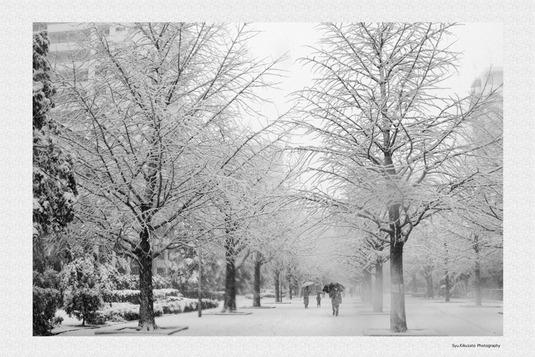 ポストカード【雪の道】5枚入り