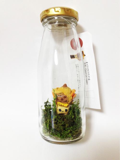 瓶づめキノコ【エリマキツチグリ】(★オマケ対象)