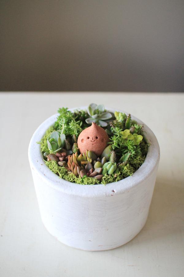 多肉植物寄せ植えwithしずくちゃん(サーモンピンク)
