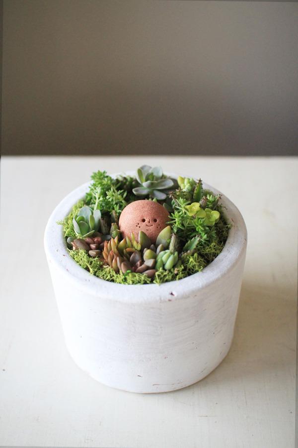 多肉植物寄せ植えwith岩っち(サーモンピンク)