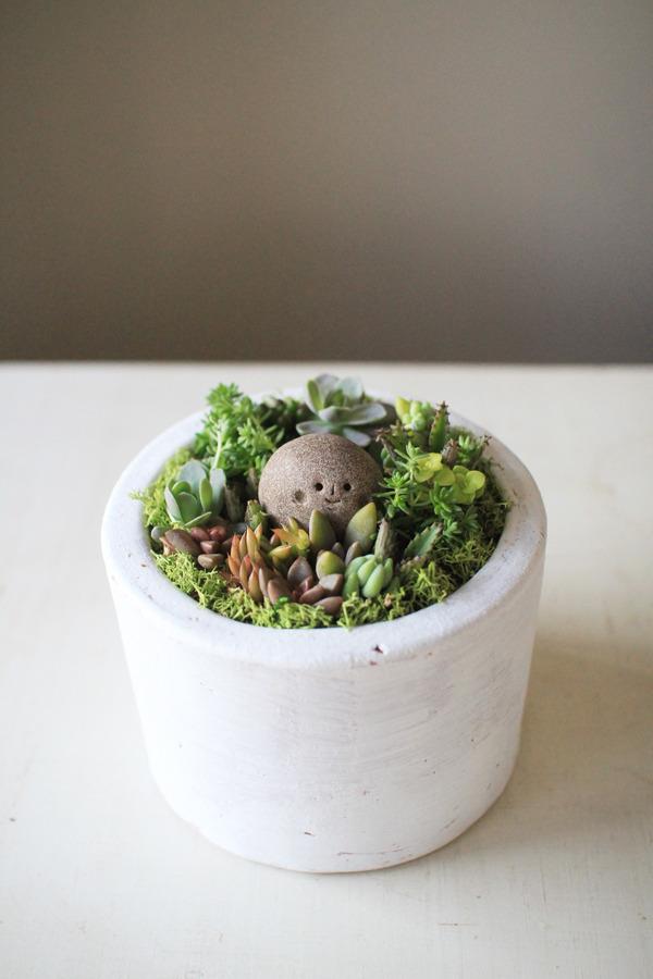 多肉植物寄せ植えwith岩っち