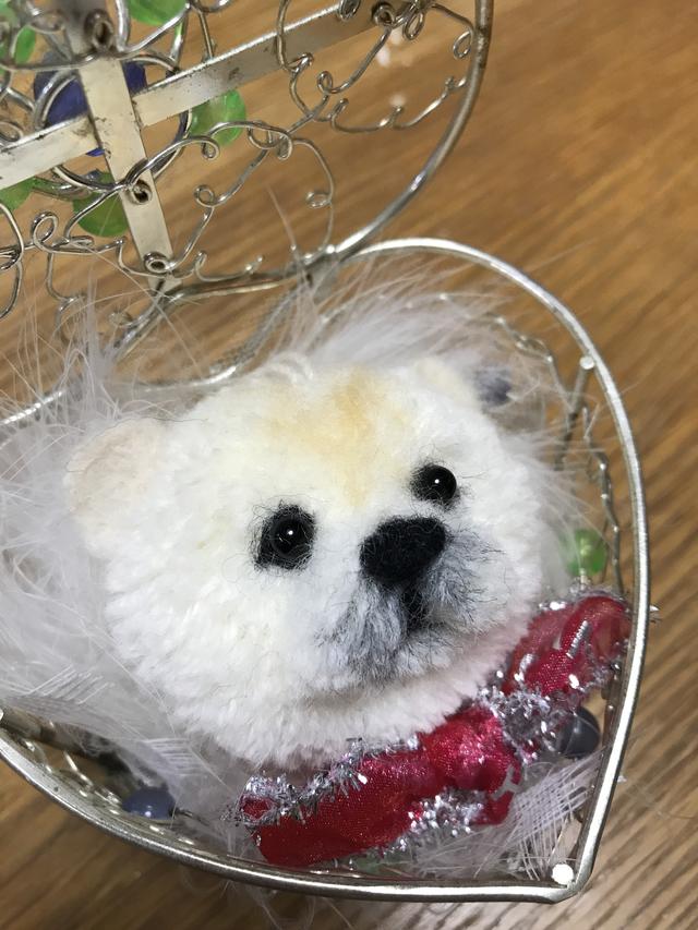 犬ぽんポメラニアン幼犬