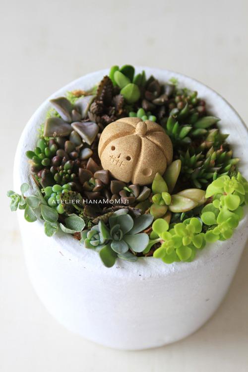 【NEW】多肉植物寄せ植えwithハロウィンかぼちゃ