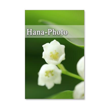 1236) スズラン      ポストカード5枚組
