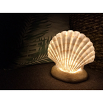 shell light