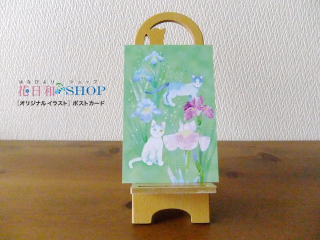 お散歩にゃんず◆花菖蒲| ポストカード2枚セット