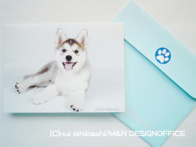 シベリアンハスキーのミニカード/ブルー(写真)