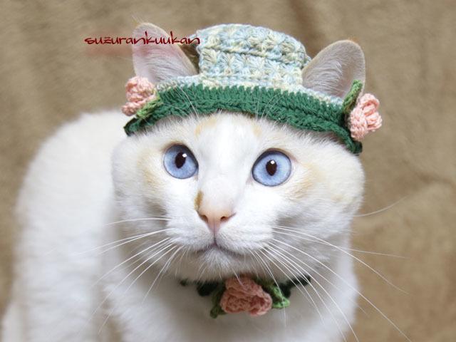 【猫用】帽子とピコット付き首輪 バラ...