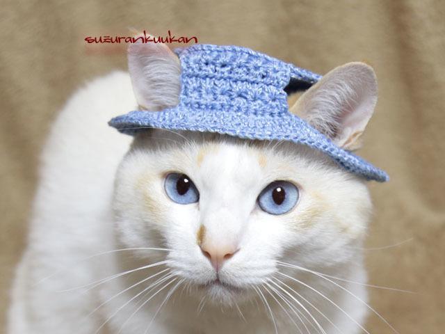 【猫用】編みカンカン帽3 2075<水色>